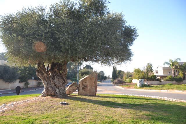 Tel Mond roundabout
